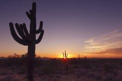Desert landscape sunset cactus tree Scottsdale Az royalty free stock photography
