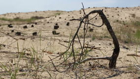 Desert landscape with tree stumps stock footage