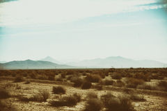 Desert landscape with tussocks Stock Photography