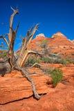 Desert landscape in Utah Royalty Free Stock Images