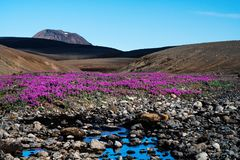 The desert landscape of the volcanic plateau with bright flowers stock photos