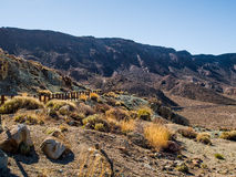 Desert landscape of Volcano Teide National Park Stock Photo