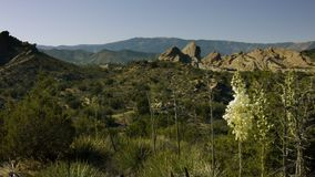 Desert Landscape With Yucca Flower stock video footage