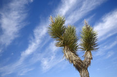 Desert Landscapes with cactus. Lonely cactus against the blue sky in desert Valley of Death Nevada Stock Image
