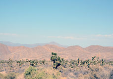 Desert lanscape Stock Photography