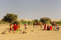 Desert life in India Royalty Free Stock Photos