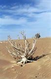 Desert life, Mauritania Royalty Free Stock Image