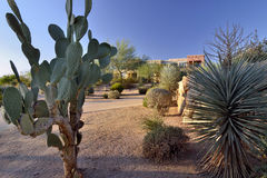 Desert Living. Various species of cactus in a Southwest Desert scene with blue sky featuring colorful housing in background Stock Images