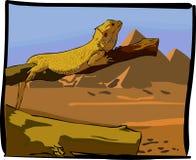 Desert lizards Royalty Free Stock Image