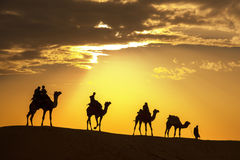 Desert local walks with camel through Thar Desert Stock Photos