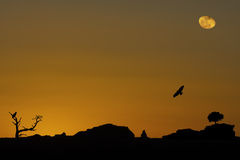Desert Magic. Sunset in desert with moon rising and birds Royalty Free Stock Photography