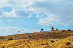 Desert. Many of the animals are gathered in the desert. The Arabian desert is famous for its beauty. Some of them are found under the foot of the pyramids stock image
