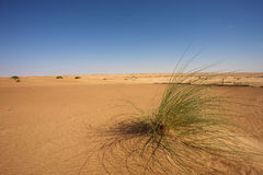 Desert in Mauritania Stock Photo