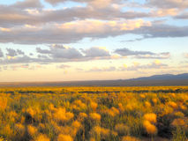 Desert Meadows. Grassy desert meadows around sunset royalty free stock photo