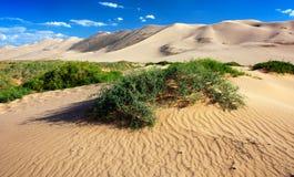 Desert - mongolia. Dune desert with shrub and blue sky Stock Photo