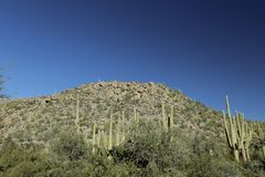 Desert mountain with cacti in Arizona Royalty Free Stock Photography
