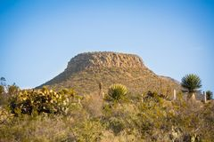 Desert mountain with cactus. At the day light Stock Images
