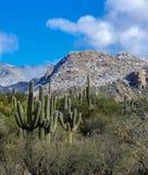 Desert Mountain Cactus. Tucson Arizona Desert Mountain stock images