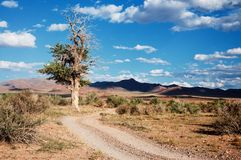 Desert mountain road in Mongolia Royalty Free Stock Images