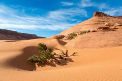 Desert Mountain and Scrub. Sandy desert soil with mountain, blue sky and scrub tree Royalty Free Stock Photo