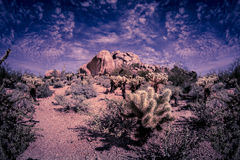 Desert mountain trail hike in Arizona Stock Images