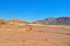 Free Desert-mountainous Terrain, Asphalt Road With Fences And Road Signs Leaving In The Distance, Colorful Sand And Mountains Of Limest Stock Photography - 124456802