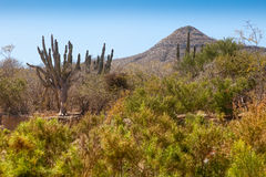 Desert and Mountains in Los Cabos Stock Photo