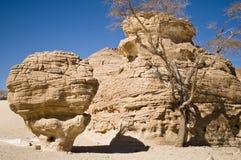 Desert mushroom Stock Photography