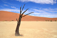 Desert Namib,Namibia,Sossusvlei pan. The oldest desert in the world with well-known red dunes Stock Photography