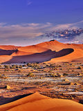 Desert of namib with orange dunes. Desert of namib with sand dunes and two gazelle royalty free stock images