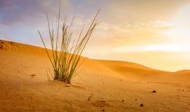 Desert near Al Ain, UAE at dawn royalty free stock photo