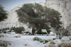 Desert near the Dead Sea, Israel Royalty Free Stock Photography