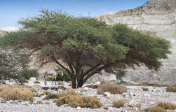 Desert near the Dead Sea, Israel Stock Photography