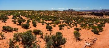 Desert near Grand Canyon Horseshoe Bend, Page,  Arizona. Desert near Grand Canyon Horseshoe Bend Page Arizona, USA civered with green plants Royalty Free Stock Photos