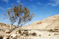 Desert Negev Royalty Free Stock Photo