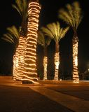 Desert Night. Palm trees at the desert resort in Palm Springs stock photography