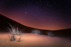 Desert night stars and plants. The desert night with stars in the sky light on the horizon and with plants lit in the foreground Stock Photo