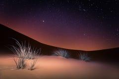Desert night stars and plants stock photo
