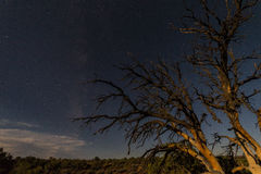 In the desert at night in USA, two dead trees Stock Image