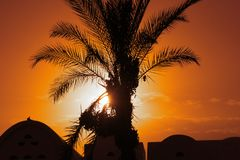 Desert Nights. Palm tree laden with Fruit with moorish roof tops with a single Dove on top sillouetted by the Sunset on the Nile, Egypt home to Valley of the royalty free stock photo