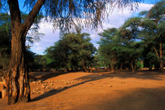 Desert oasis stock image