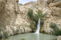 Desert oasis Royalty Free Stock Photo