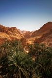 Desert oasis. Sahara desert oasis with palm trees Stock Photography