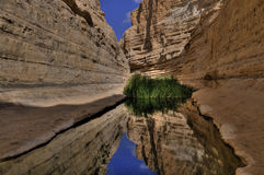 Desert oasis. Ovdat spring, an oasis in southern Israel Royalty Free Stock Photos