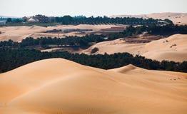 Desert Oasis Stock Images