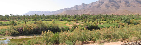 Desert oasis with culture. Fields and mountains behind - Zagora - Draa valley - Morocco - Panorama Stock Images