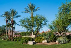 Desert Oasis Garden stock photo