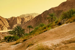 Desert oasis. Oasis in the desert with palm and mountain view Royalty Free Stock Photo