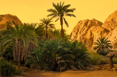 Desert oasis. Oasis in the desert with palm and mountain view Royalty Free Stock Photos