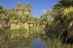 Desert Oasis Pond Royalty Free Stock Images